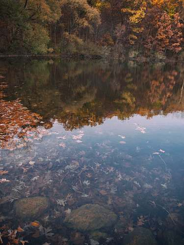 nature leaves in body of water reflecting treeline outdoors