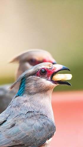bird bird eating food beak
