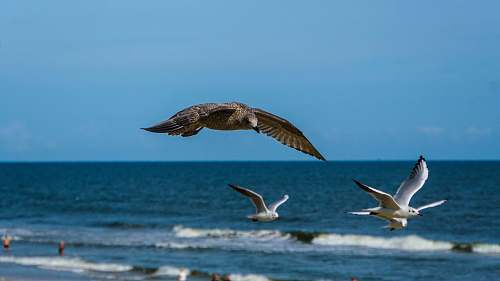 bird birds flying above the ocean during day flying
