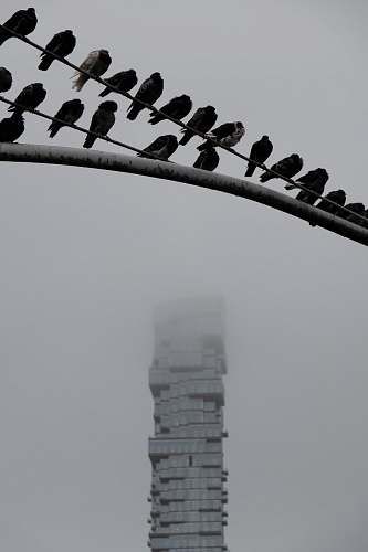 bird birds on fence flock