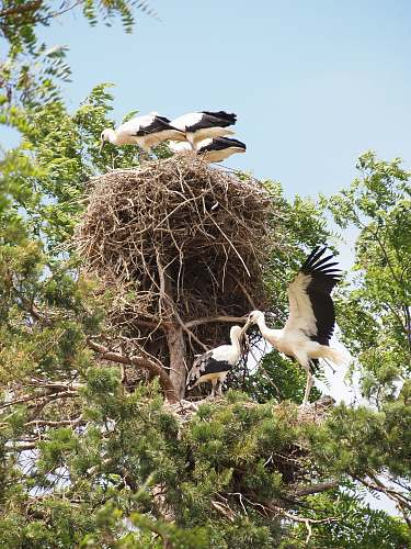 bird birds on tree branch and nest on tree stork