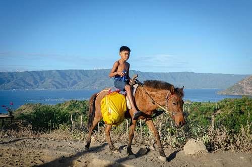 horse boy riding brown horse mammal