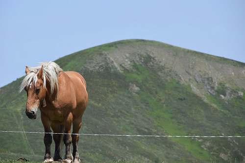 mammal brown and white horse horse