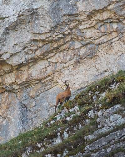 kangaroo brown deer photography mammal