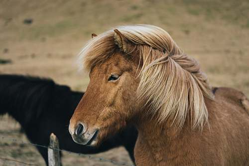 horse brown horse mammal