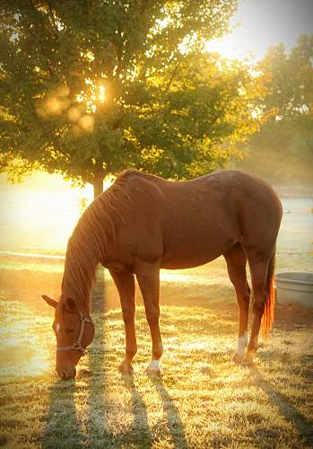 horse brown horse on focus photography mammal