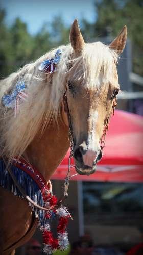 horse brown horse on selective focus photography mammal