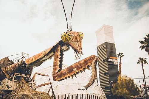 reptile brown insect monster photography dinosaur
