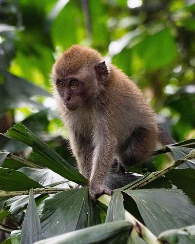 mammal brown monkey on plant monkey