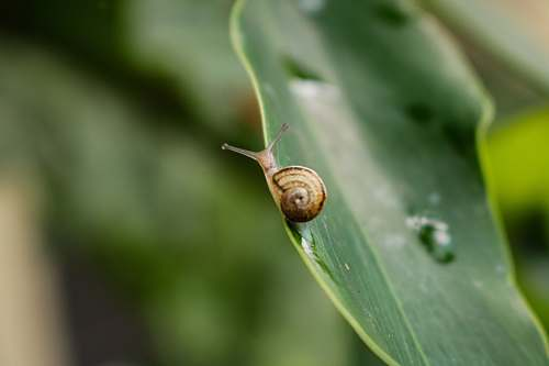 insect brown snail on leaf invertebrate