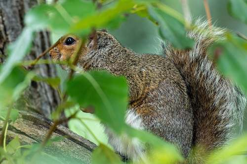 mammal brown squirrel on tree rodent