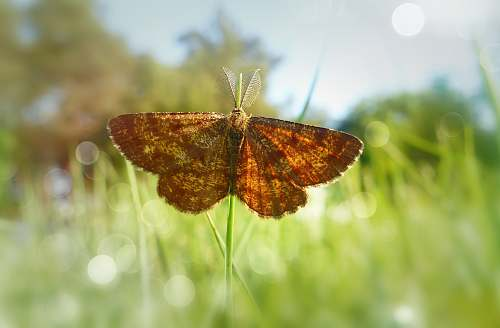 insect butterfly on grass invertebrate