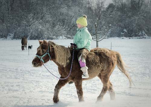 mammal child riding a horse in a snowfield horse