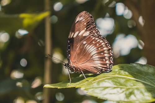 insect close-up photography of brown butterfly invertebrate