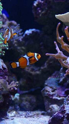 fish clown fishes underwater nature
