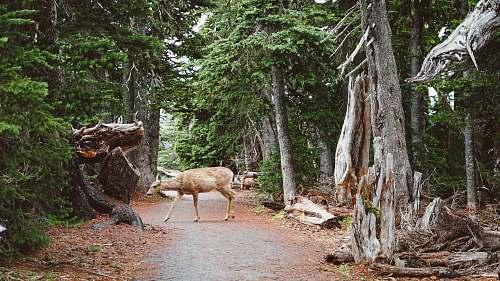 deer deer walking in the middle of forest tree