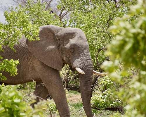 elephant elephant near plants mammal