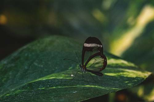 insect glass winged butterfly perched on green leaf invertebrate