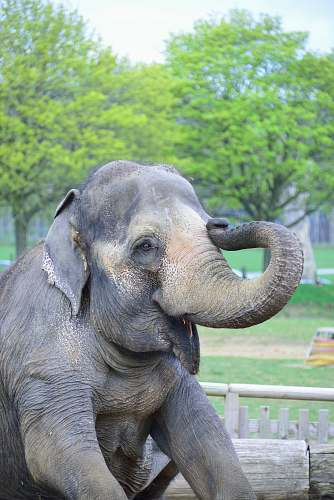 elephant gray and brown elephant during daytime mammal