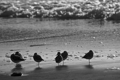 bird grayscale photography of birds on shore black-and-white