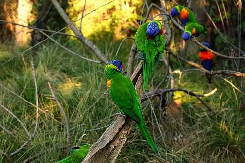 bird green birds on focus photography parrot