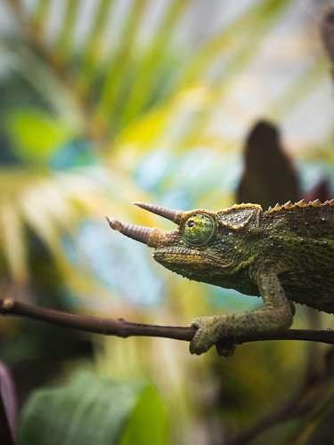 lizard green frog reptile