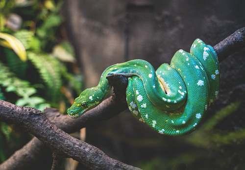 reptile green snake on tree branch snake