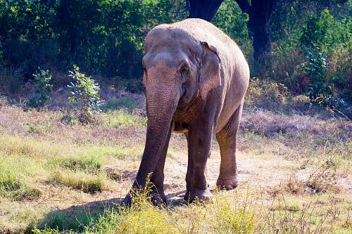 mammal grey elephant close-up photography elephant