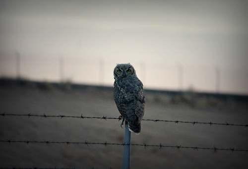 bird grey owl on fence grey