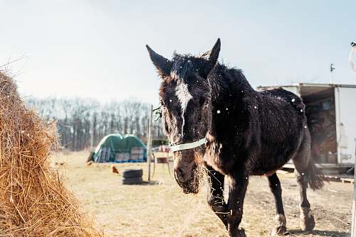 mammal horse near food horse