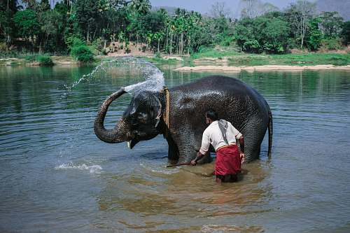 mammal man near elephant taking bath at river during daytime elephant