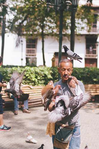 bird man playing with birds person