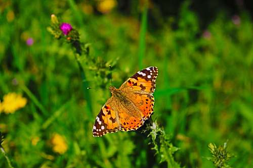 insect orange butterfly photography invertebrate