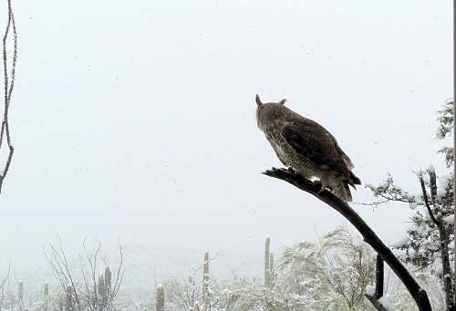 bird owl on tree accipiter