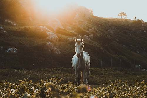 mammal photo of galloping horse towards green grass horse