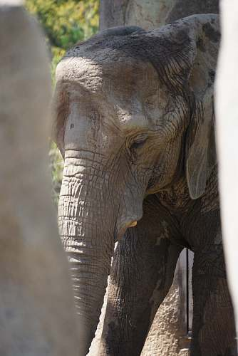 mammal photo of gray elephant elephant