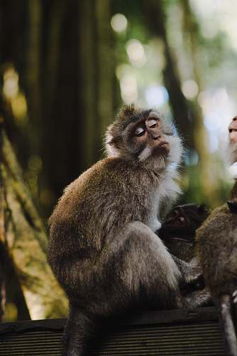 mammal photo of two brown monkey on black surface monkey
