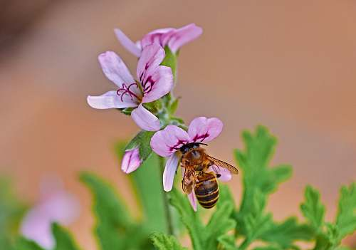insect purple-petaled flower with bee invertebrate