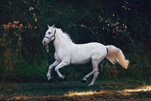 mammal running white horse horse
