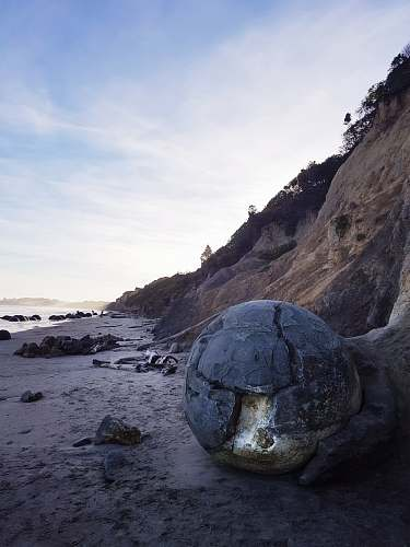 reptile seashore during daytime sea life