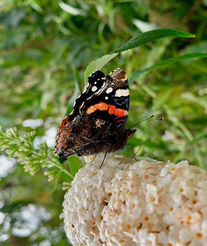insect selective focus photography of black and brown butterfly invertebrate