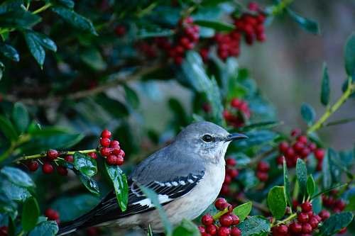 bird selective focus photography of mockingbird jay