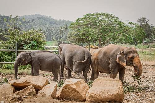 mammal three elephants inside fence during daytime elephant
