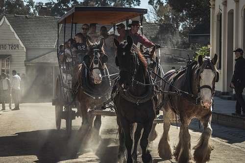 mammal tourist riding coach horse