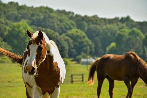 horse two horses mammal