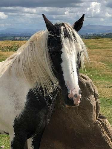 mammal white and black horse horse
