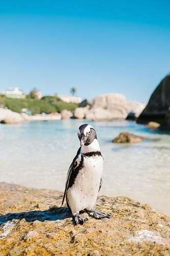 bird white bird near sea penguin