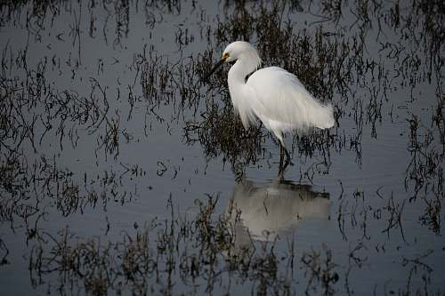 photo bird white bird on focus photography ardeidae free for commercial use images