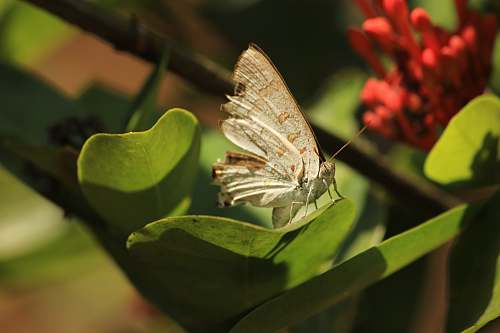insect white butterfly on green leaf invertebrate