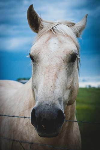 mammal white horse inside fence horse